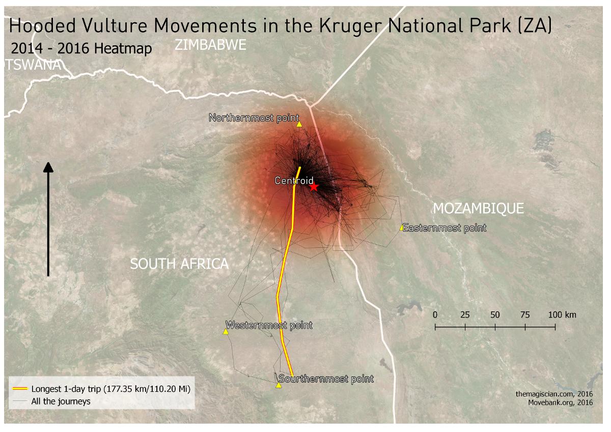 Hooded Vulture Trips Resumé in the Kruger National Park